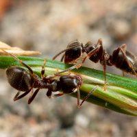 enviro-extermination-ants