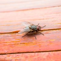 enviro-extermination-flies