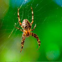 enviro-extermination-spider
