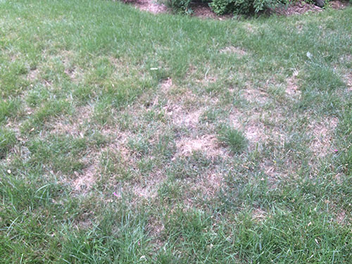 Lawn Care for Summer Laval